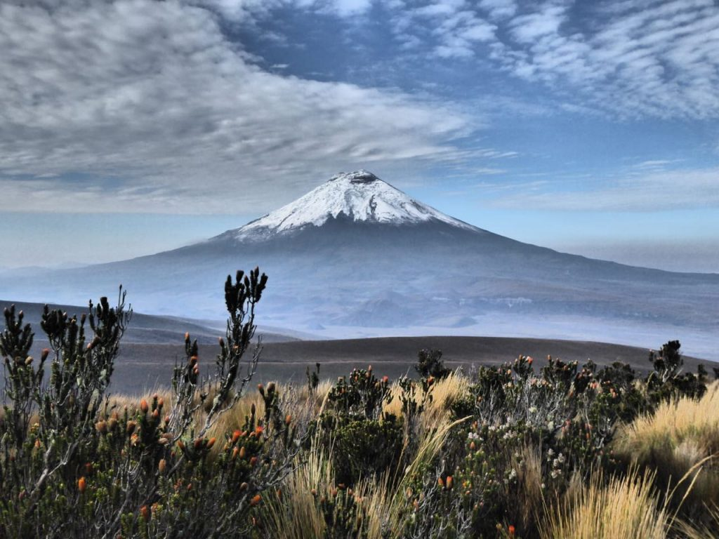 Cotopaxi Volcano from the grassland of the cotopaxi national park